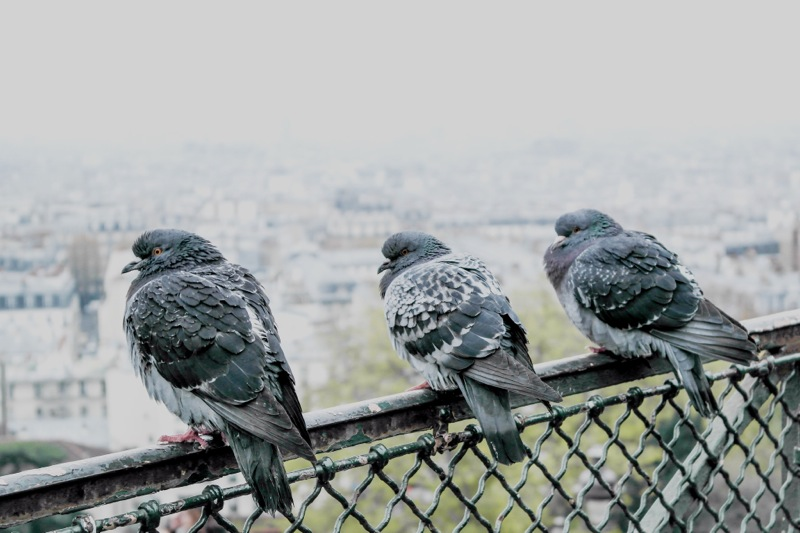 Pariis4