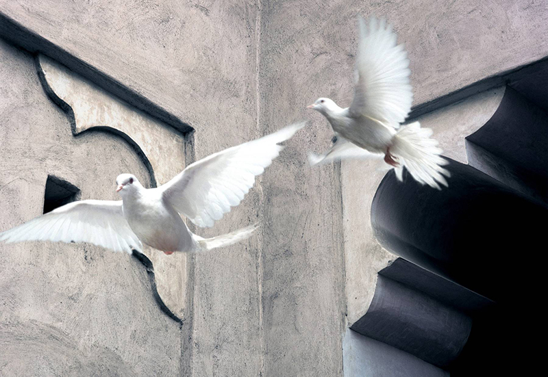 Two doves fly away, UAE.